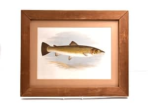 Print of a Bull Trout – Rev W Houghton 1879