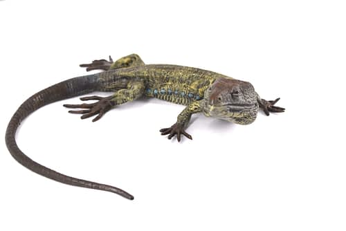 collectable antique bronze lizard