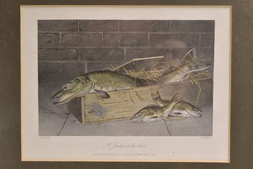 Framed Fish Print