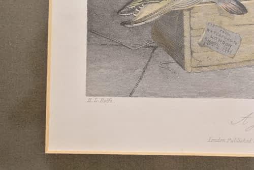 Framed Mezzoprint of a Pike