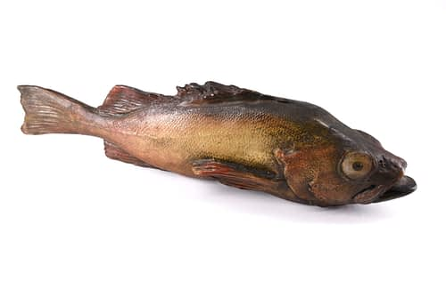 cod fish Figurine