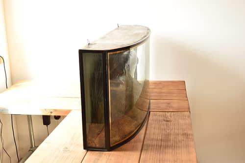 Antiques Forum - Cased Fish